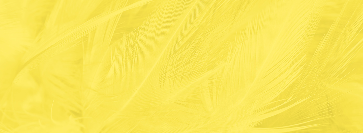 Yellow feather background